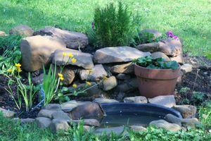 Snail Garden 1